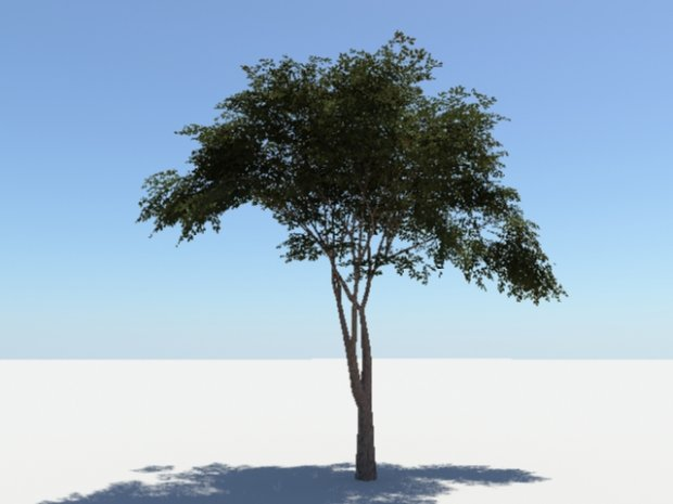 3D Models Trees / Plants template
